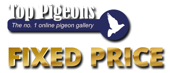 Top Pigeons Fixed Price Logo